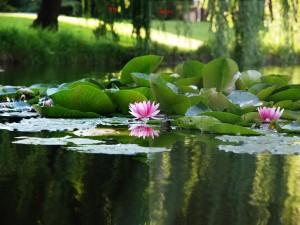 Bloem in water